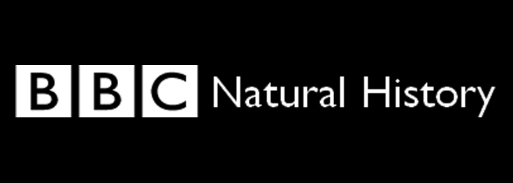 BBC LogoBW